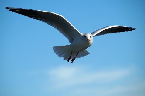 gull-591350_1280