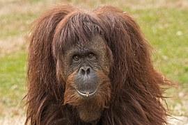 primate-455863__180
