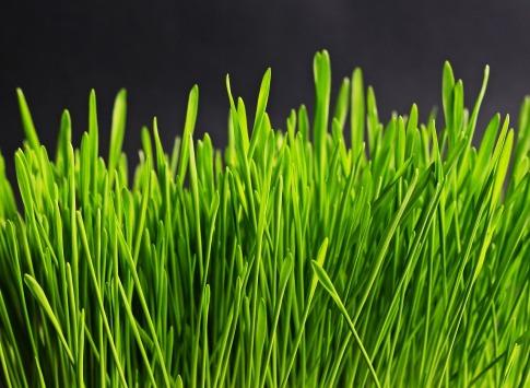 grass-534873_1280