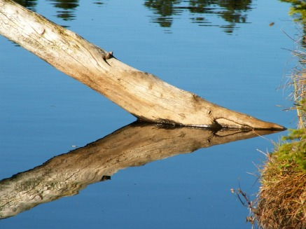 tree-trunk-in-the-water-1254566_1280