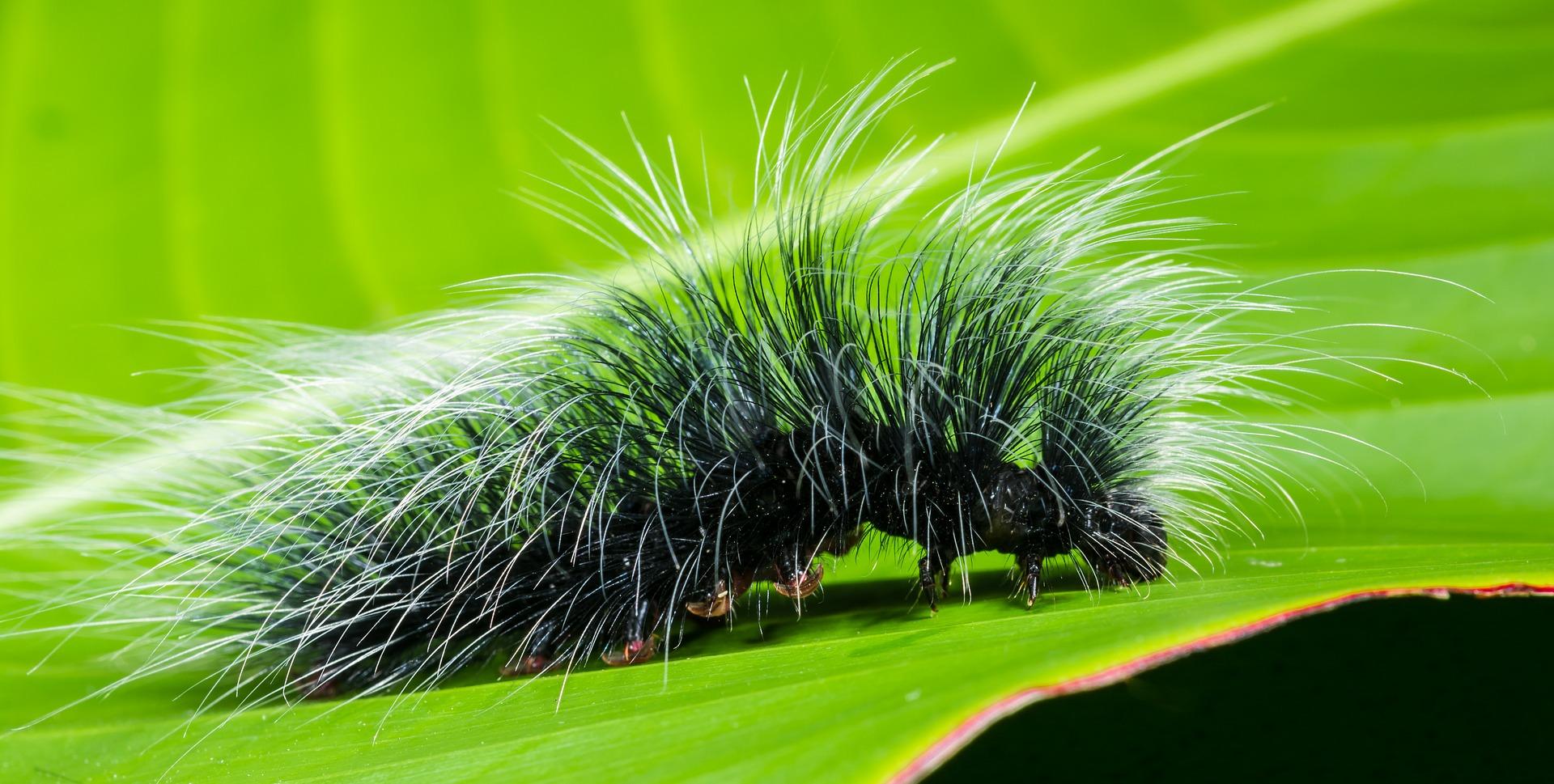 caterpillar-399156_1920