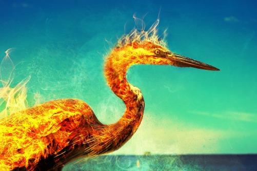 phoenix-2733938_1920