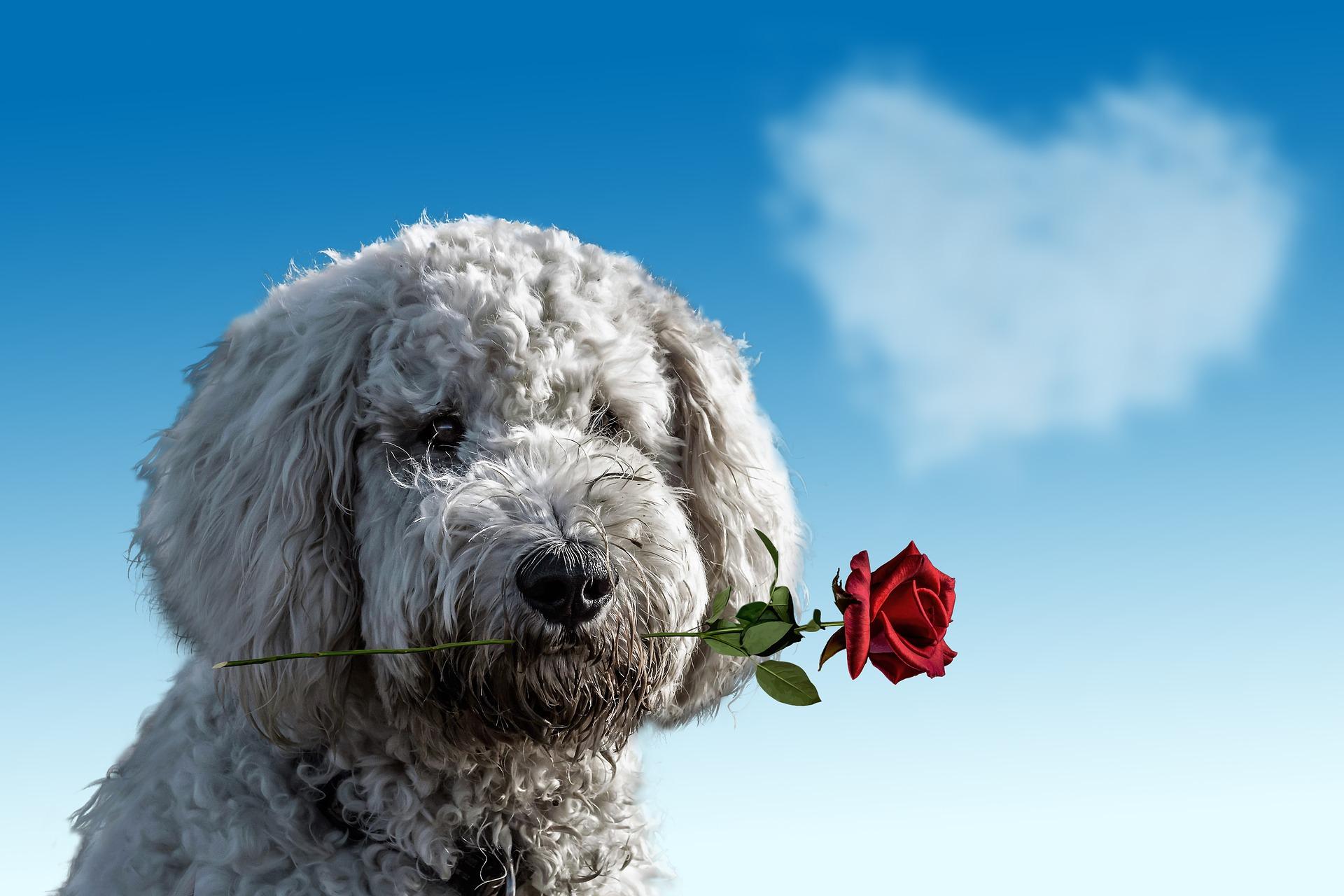 valentines-day-3135789_1920 (1)