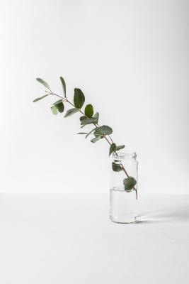 Glass jar with gum leaves. White background.